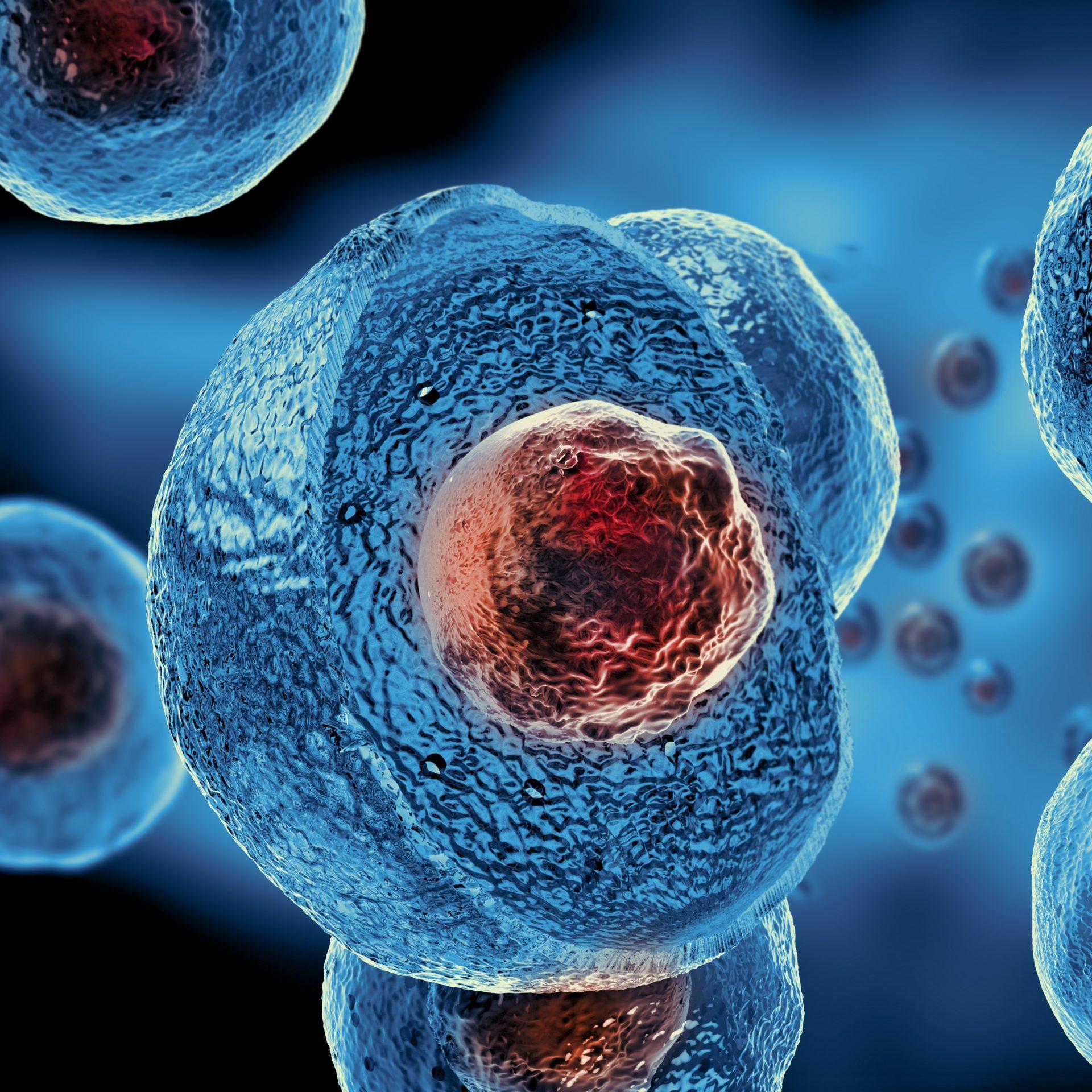 Cellule-biologie-2